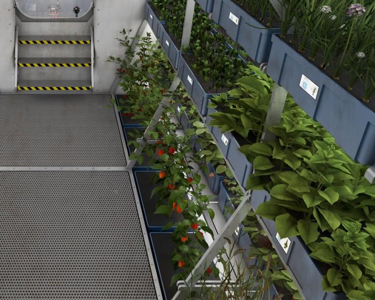 کاشت گوجه فرنگی در فضا