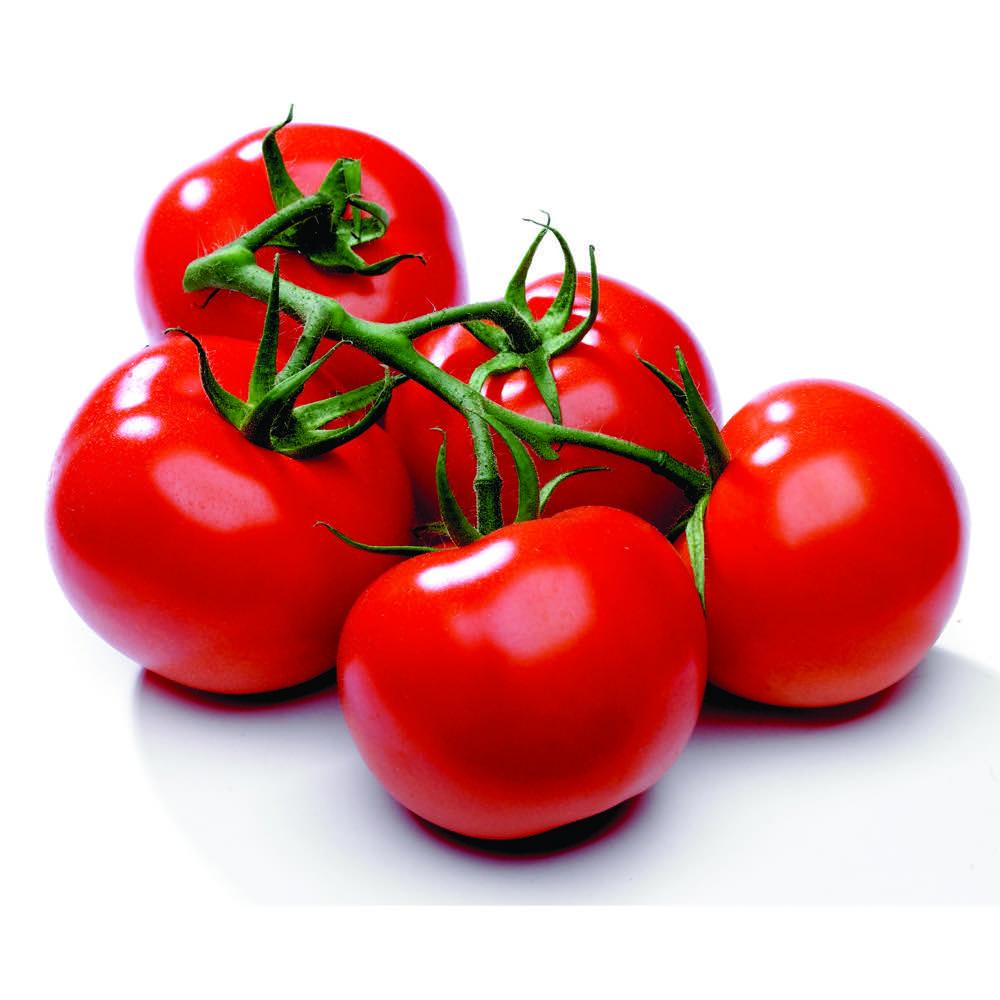انتخاب گوجه فرنگی سالم