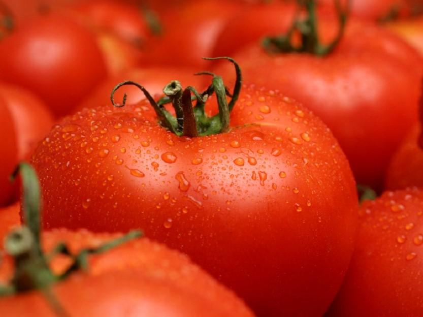 کاشت گوجهفرنگی