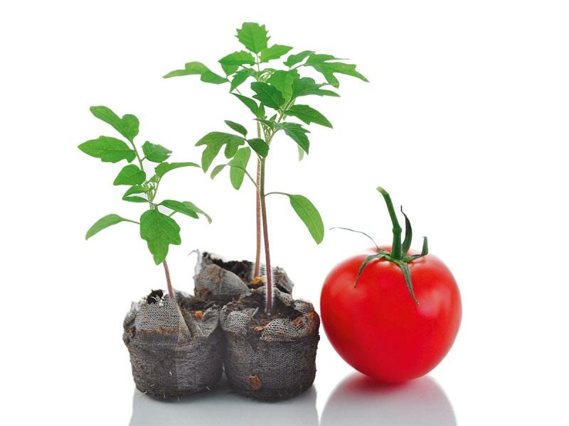 کاشت گوجهفرنگی در ناسا